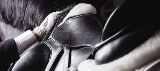 accessoires pour cheval