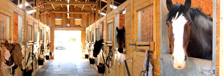 Aménagement d'écuries pour chevaux